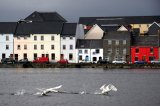 Swans take flight, the Long Walk, Galway