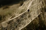 A spider's web captures the morning dew near Derryclare, Co. Galway